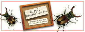 """2 oversized beetles and specimen cards: Text """"Bugs...outside the box. Discover the Art within the science"""""""