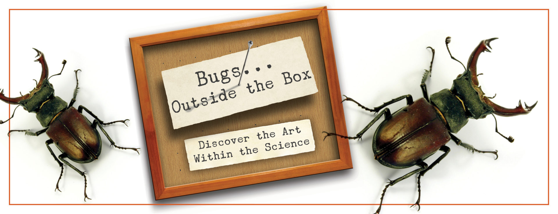 2 oversized beetles and specimen cards: Text