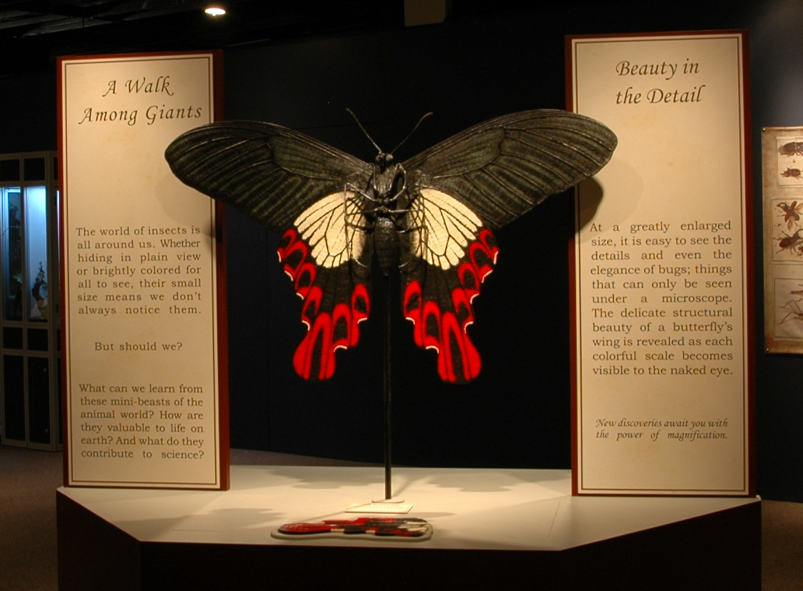 large red and black butterfly sculpture