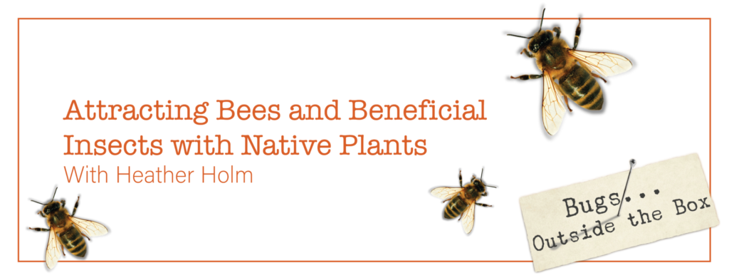 text: Attracting Bees and Beneficial Insects with Native Plants with Heather Holm