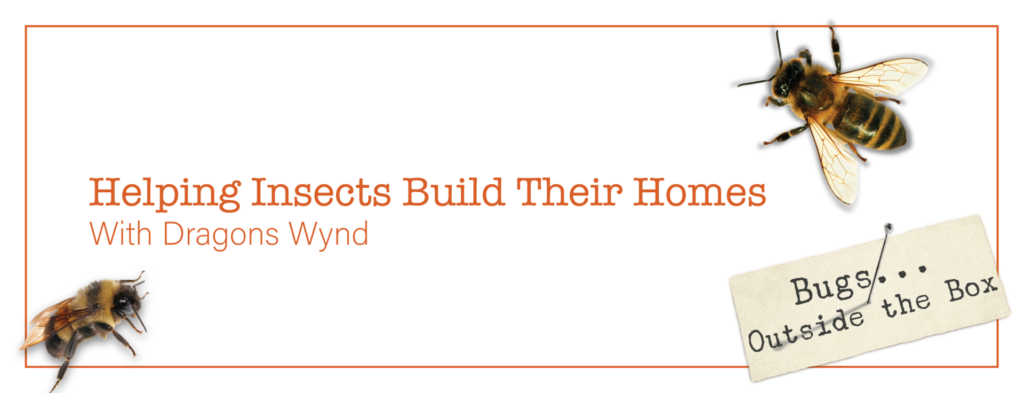 2 Bees with text: Helping Insects Build Their Homes with Dragons Wynd