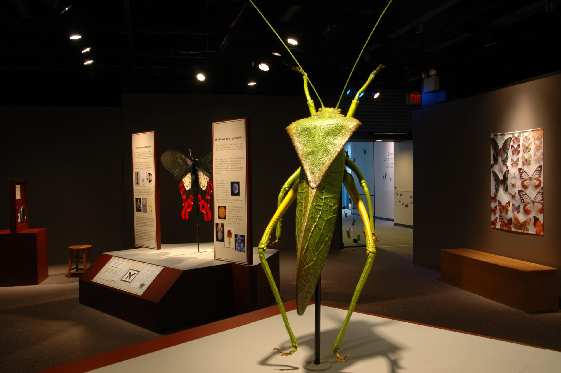 Katydid (large green insect) sculpture in museum