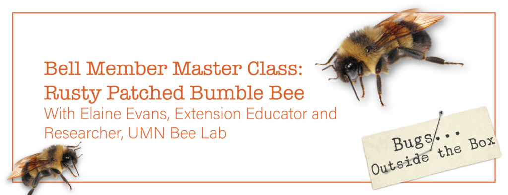 text: Bell Member Master Class: Rusty Patched Bumble Bee with Elaine Evans, Extension Educator and Researcher, UMN Bee Lab