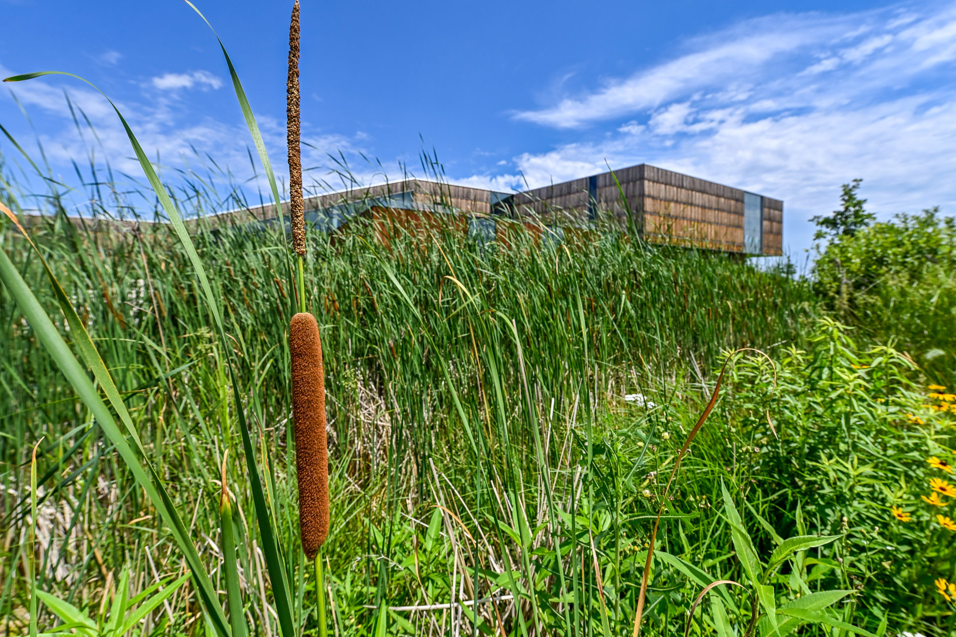 Bell Museum exterior with learning landscape summer