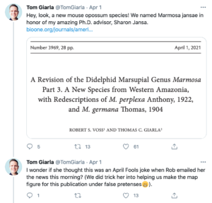 """A tweet from Tom Giarla that says, """"Hey Look, a new mouse opossum species! We named Marmosa Kansas in honor of my amazing Ph.D. advisor, Sharon Jansa."""""""