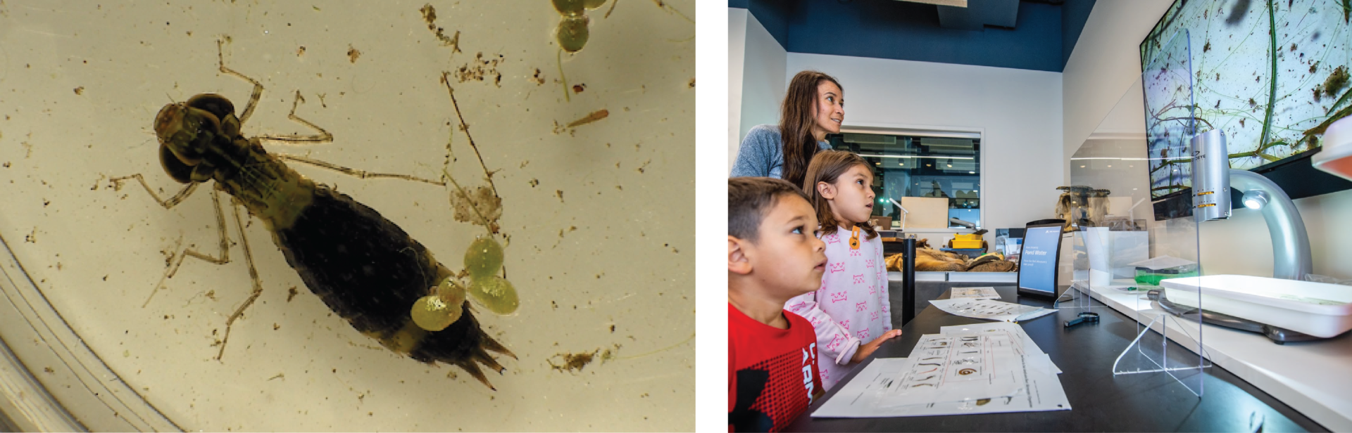 Two images side by side. One is a bug under a microscope and the other is a group of people looking at a microscope