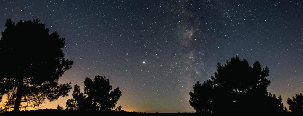 Night sky above three silhouette trees