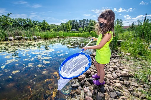 A child catching bugs with a net by the pond