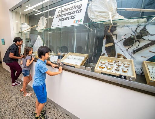 A group of people looking at a collection of bug specimens