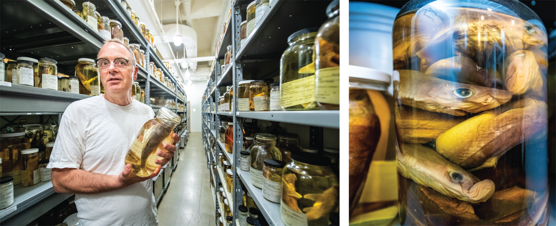 Curator of Fishes Andrew Simmons in the collections and a close up image of fish specimens in a jar