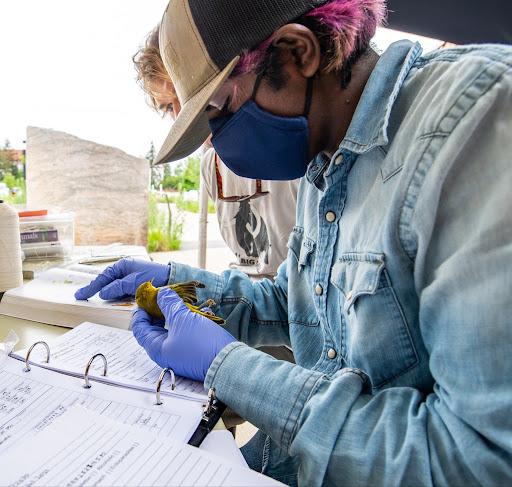 A person examining a bird specimen